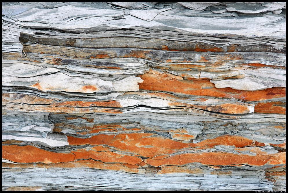 balti klint, klindilõik, detail, kivim, kivi, rock, stone, lehed, abstrakt