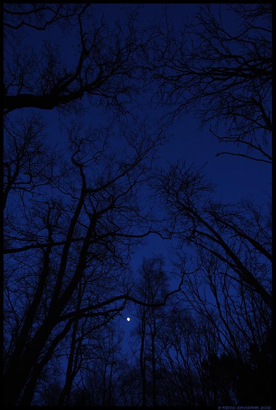 Öömeeleolu, Nighttime, puud, trees, mood, moody, kuu, moon, mets, metsas, forest, tree, branches, oksad
