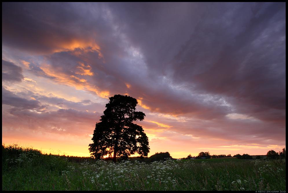 päikeseloojang, sunset, puu, tree, õhtu