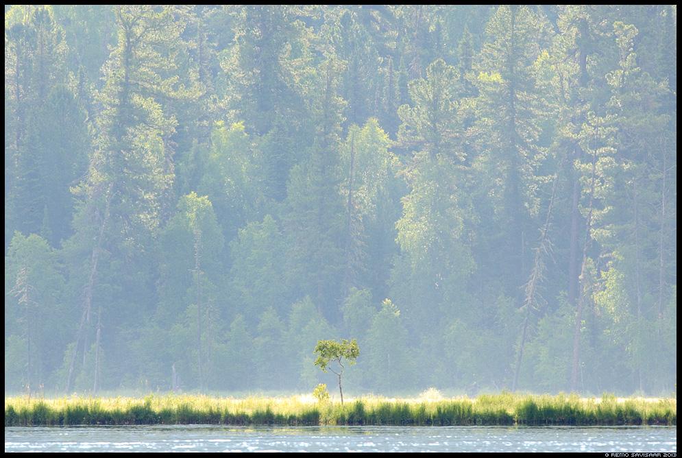 Eriline, Special, Lake baikal, baikal, Siberia, Russia Remo Savisaar nature wildlife photography photo blog loodusfotod loodusfoto looduspilt looduspildid