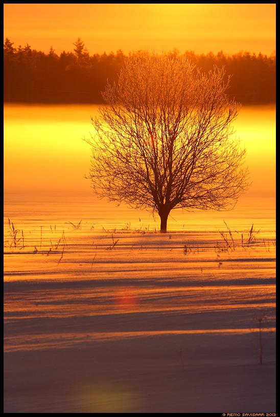 Talvemaagia, Winter magic talv winter lumi lumine snow snowy udu fog foggy päikesetõus puu põõsas Estonia, Europe Remo Savisaar Eesti loodus  Estonian Estonia Baltic nature wildlife photography photo blog loodusfotod loodusfoto looduspilt looduspildid