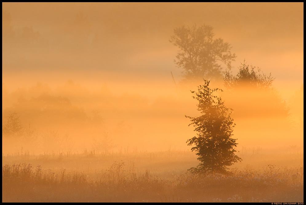 Hommikukuld, Golden morning tartumaa Estonia, Europe Remo Savisaar Eesti loodus  Estonian Estonia Baltic nature wildlife photography photo blog loodusfotod loodusfoto looduspilt looduspildid
