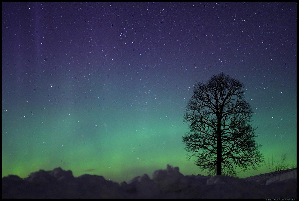 Imede öö, The Night of Miracles, Virmalised, The Northern Lights, tähistaevas, pime, tähed, meeleolu, värvidemäng, märts, märtsikuu, march, puu, tree, Aurora Borealis