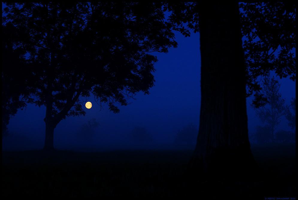 Öövaikus, Silence of the Night, Suveõhtu, Summer evening, kuu, moon, heinamaa, suvi, meeleolu, öö, hämar, moonlight, kuuvalgel, puud, puu, tree, trees