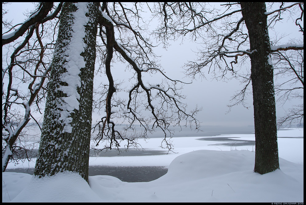 Vaikne aeg, Quiet time Remo Savisaar Eesti loodus lumi lumine snow snowy saadjärv jälg jäljed tracks footprint footprints Estonian Estonia Baltic nature wildlife photography photo blog loodusfotod loodusfoto looduspilt looduspildid