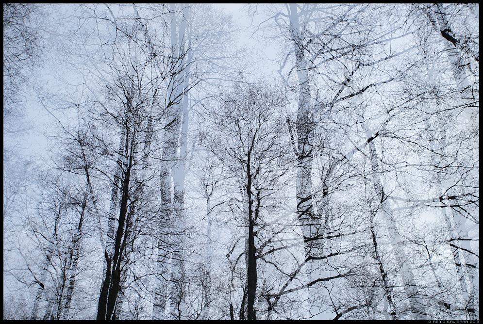 Raagus puud, Bare trees Remo Savisaar Eesti loodus Estonian Estonia Baltic nature wildlife photography photo blog loodusfotod loodusfoto looduspilt looduspildid