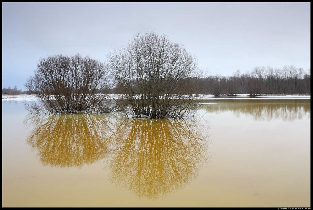 Kevad, Spring, kevadveed, spring waters, jõgi, alam-pedja, river, märts, march, puu, puud, põõsas, põõsad, üleujutus, suurvesi