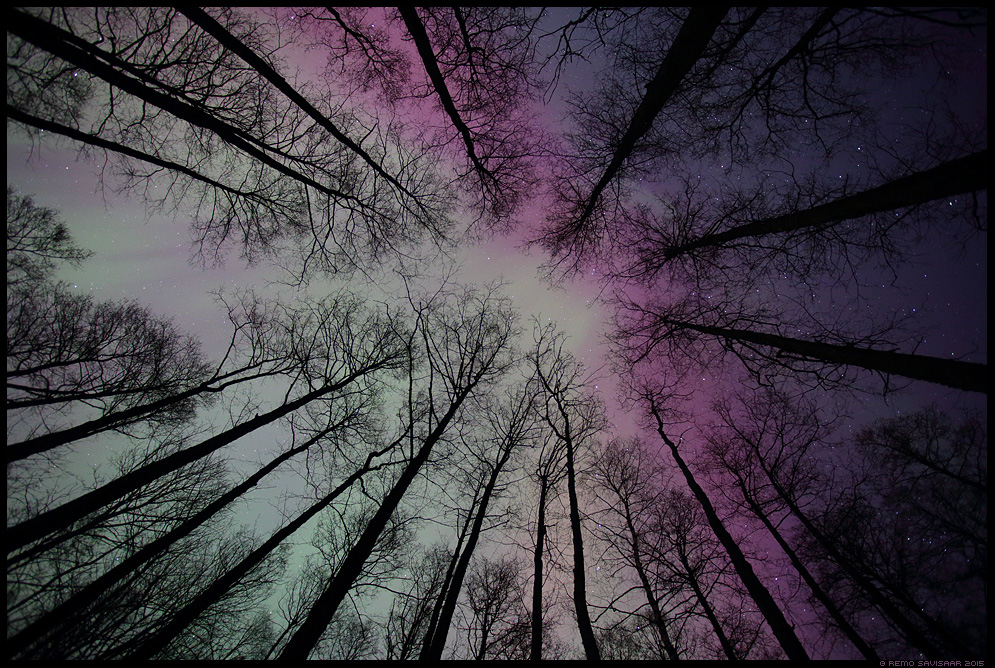 Värviderikas tähistaevas, Colorful starry sky Aurora borealis, Northern Lights, Virmalised virmaline öö puud mets trees forest silhouette siluett meeleolu moody gloomy öömeeleolu Remo Savisaar Eesti loodus  Estonian Estonia Baltic nature wildlife photography photo blog loodusfotod loodusfoto looduspilt looduspildid