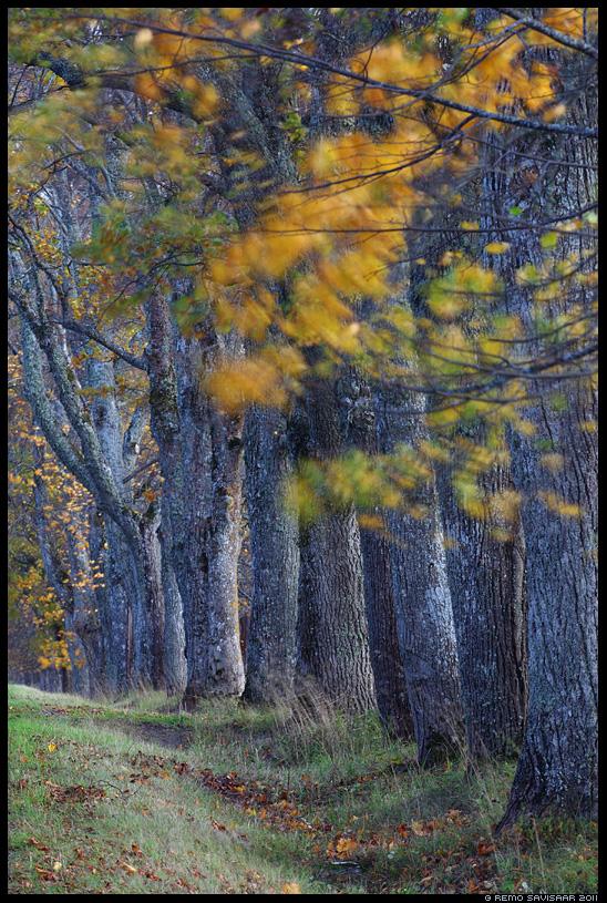 Sügis, Autumn, puud, trees