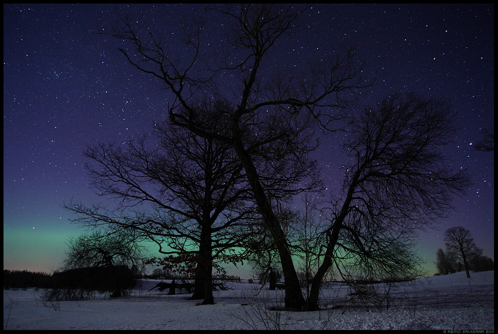 Puuhiiud, Powerful trees, talv, lumi, winter, tree, trees, puud, puu, maastik, virmalised, aurora borealis