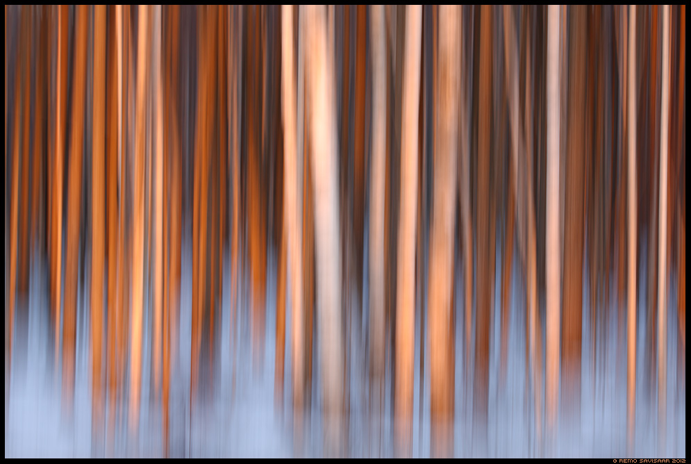 Metsameeleolu, Forest mood, kask, kased, birch, march, märts, meeleolu, moody, mood, forest, trees