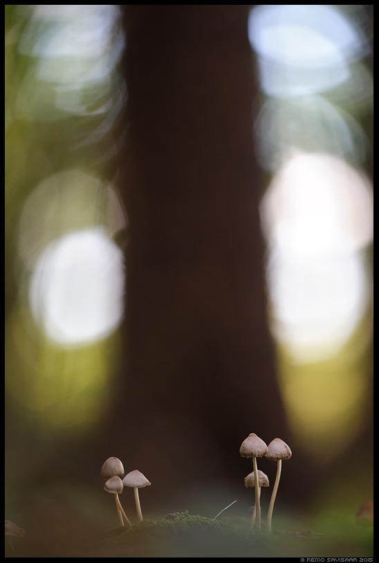 Sümeetria, Symmetry seen seened mushrooms fungi forest autumn mets sügisannid Remo Savisaar Eesti loodus  Estonian Estonia Baltic nature wildlife photography photo blog loodusfotod loodusfoto looduspilt looduspildid
