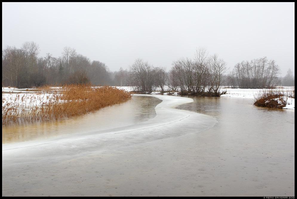 Selgroog, Backbone, kevad, jõgi, river, spring, vihmasadu, raining, jõejää, ice, vool, voolab, veevool, sulab, sula, alam-pedja, pedja jõgi, pedja river