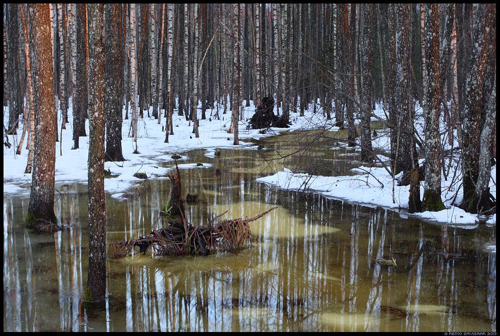 Sulavesi metsa all, Meltwater Remo Savisaar Eesti loodus Estonian Estonia Baltic nature wildlife photography photo blog loodusfotod loodusfoto looduspilt looduspildid