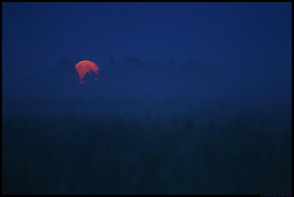 Suveõhtu, Summer evening, kuu, moon, heinamaa, suvi, meeleolu, öö, hämar