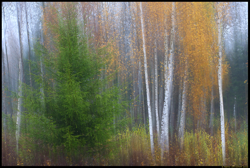 Sügisene meeleolu, Autumn mood Remo Savisaar Eesti loodus Estonian Estonia Baltic nature wildlife photography photo blog loodusfotod loodusfoto looduspilt looduspildid