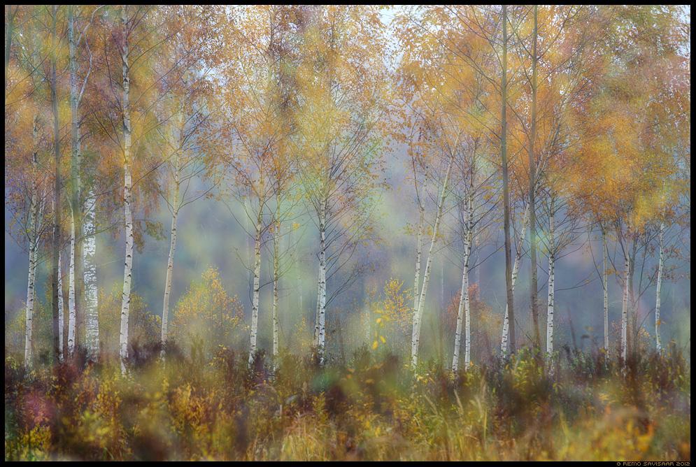Sügis, meeleolu, Autumn mood Remo Savisaar Eesti loodus Estonian Estonia Baltic nature wildlife photography photo blog loodusfotod loodusfoto looduspilt looduspildid