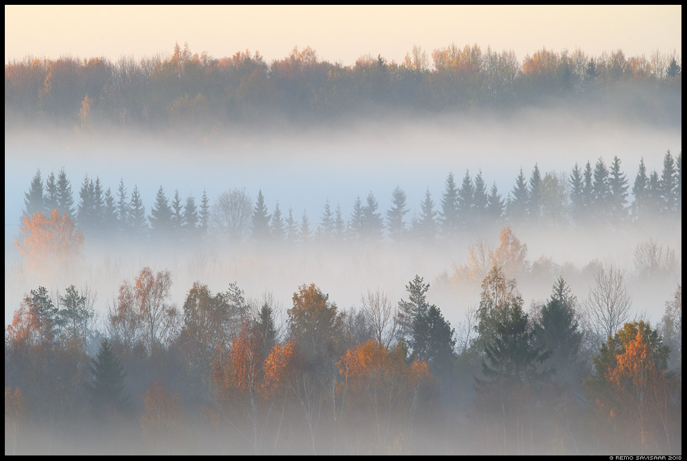 Kihid, Layers vooremaa udu udune mist misty sügis autumn fall Remo Savisaar Eesti loodus  Estonian Estonia Baltic nature wildlife photography photo blog loodusfotod loodusfoto looduspilt looduspildid