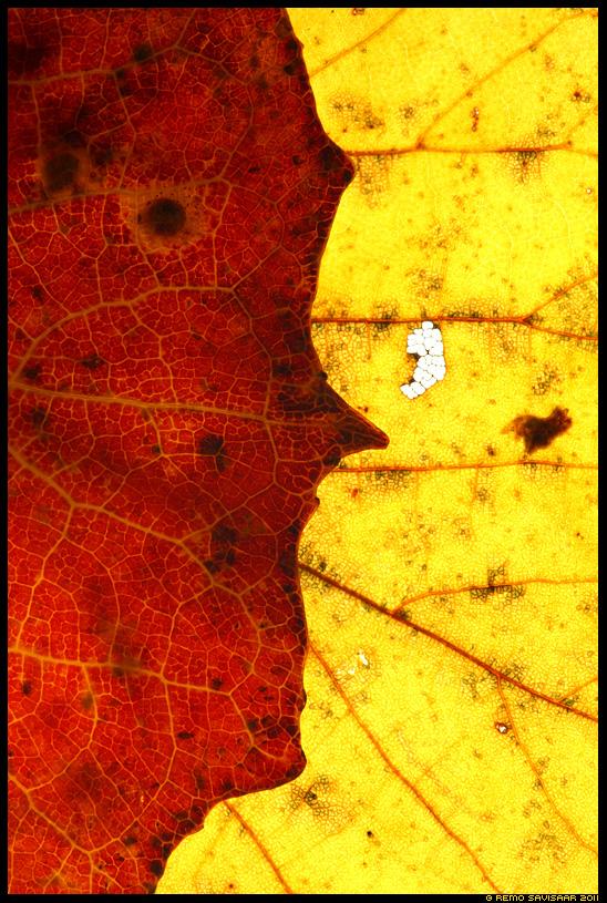 Sügise nägu, Autumn's Face, sügis, autumn, leht, leaf, lepp, väriline