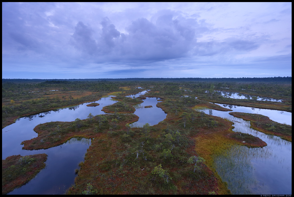 Sünge hommik rabas, Gloomy morning in the Bog raba männikjärve endla bog swamp Remo Savisaar Eesti loodus  Estonian Estonia Baltic nature wildlife photography photo blog loodusfotod loodusfoto looduspilt looduspildid