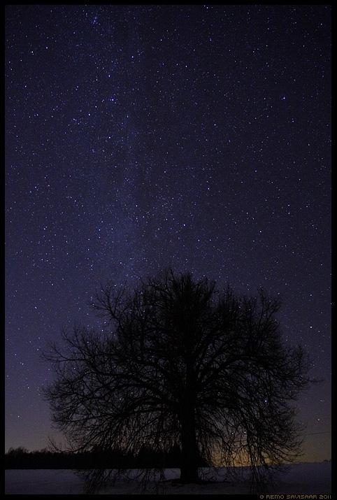 Ööaeg, Nighttime, tähistaevas, linnutee, night sky, puu, tree, meeleolu
