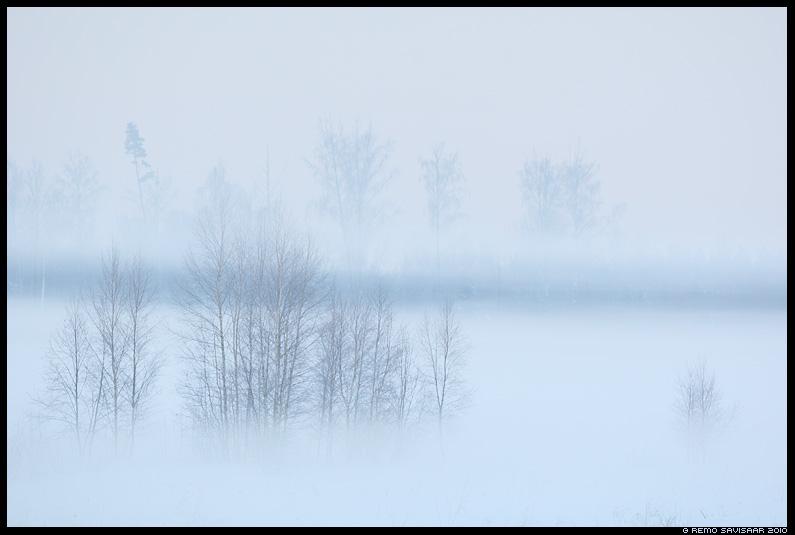 talvine udu, taliudu, winter, talv, lumi, udu, udune, fog, foggy