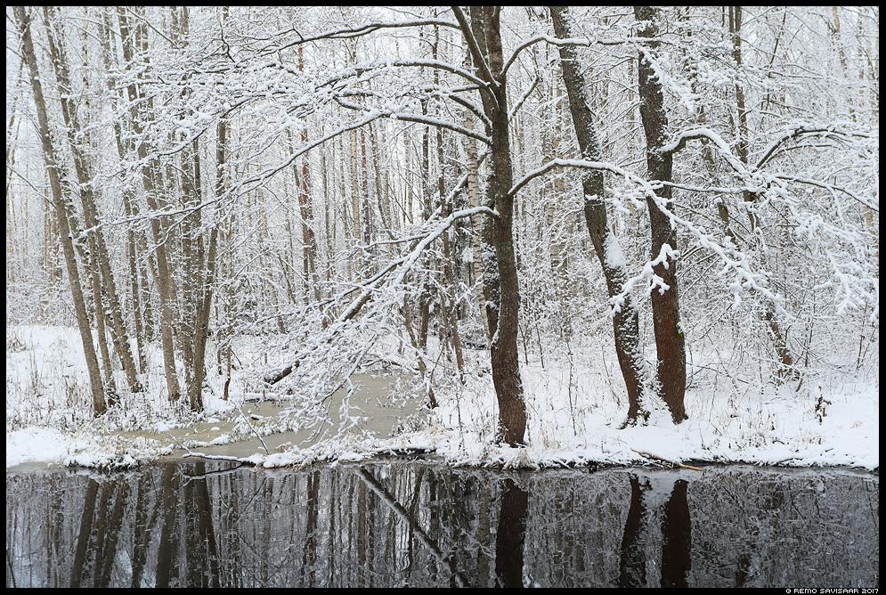 Ehitud puud, Decorated trees jõgi river lumine snowy jõgevamaa Remo Savisaar Eesti loodus Estonian Estonia Baltic nature wildlife photography photo blog loodusfotod loodusfoto looduspilt looduspildid
