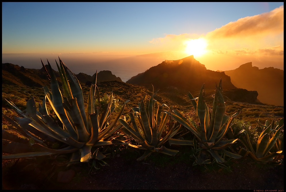 Kuldne hetk Teno mägedes, Golden moment by the Teno mountains agaav The sunrise tequila agave Agave tequilana Remo Savisaar nature wildlife photography photo blog loodusfotod loodusfoto looduspilt looduspildid landscape nature wild wildlife nordic