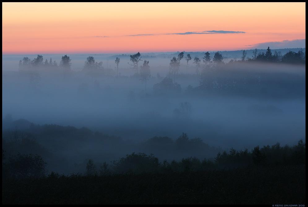 Vihmamets, Rainforest, Vooremaa, udu, udune, maastik, fog, foggy, mist, misty, suvi, suveaeg, summer, summertime, nature