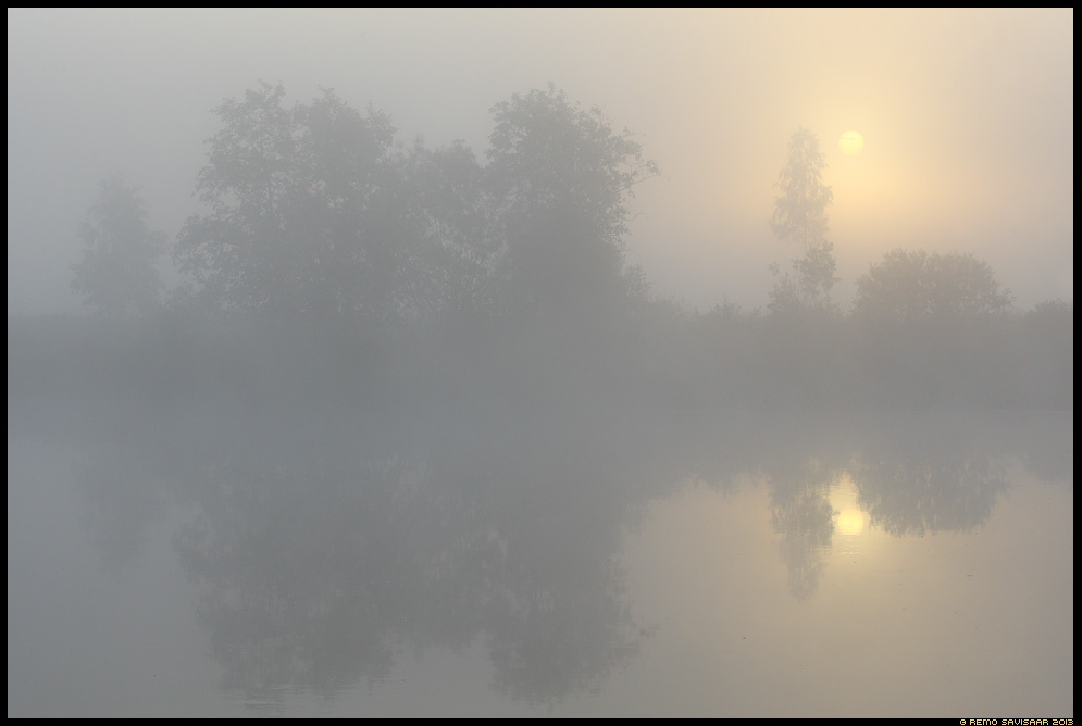 Udune hommik, Foggy morning emajõgi tartumaa Estonia, Europe Remo Savisaar Eesti loodus  Estonian Estonia Baltic nature wildlife photography photo blog loodusfotod loodusfoto looduspilt looduspildid