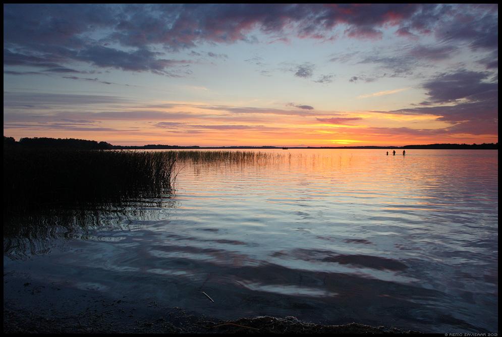 inimesed, ujujad, ujumine, swimmers, vesi, järv, saadjärv, water, lake, vooremaa, päikeseloojang, sunset