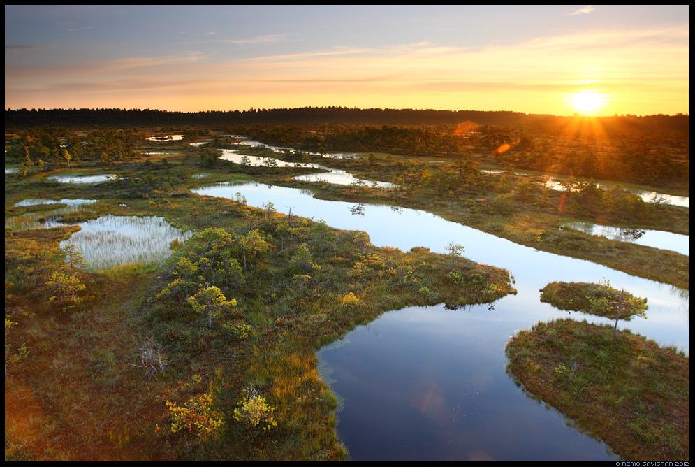 Päikesetõus rabas, Sunrise at the Bog, eesti, loodus, raba, bog, swamp, jõgevamaa, nature, loodusfoto, loodusfotod