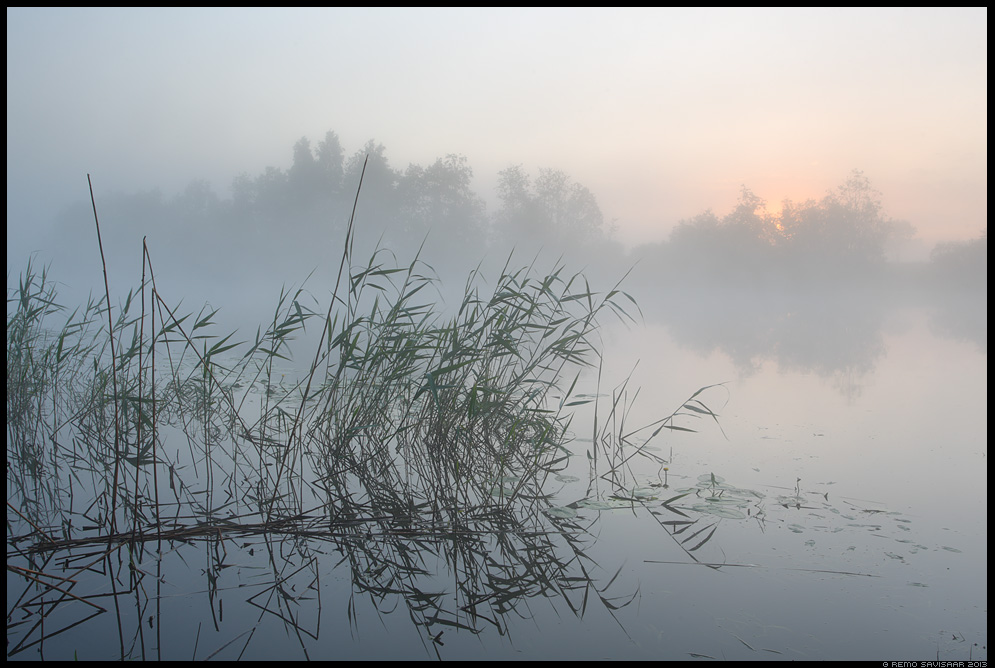 Jahe hommik, Chilly morning emajõgi tartumaa Estonia, Europe Remo Savisaar Eesti loodus  Estonian Estonia Baltic nature wildlife photography photo blog loodusfotod loodusfoto looduspilt looduspildid