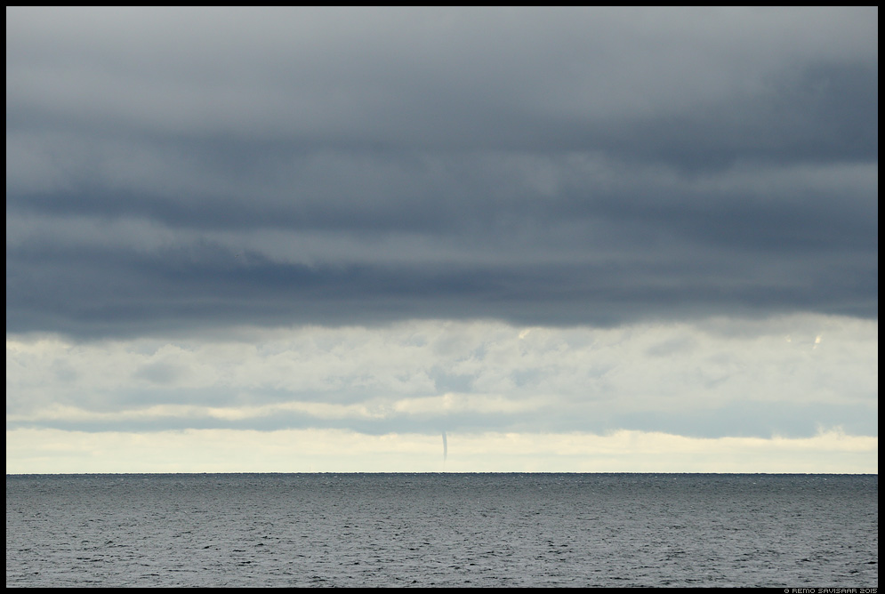 Pilvesammas ehk Vesipüks, Waterspout Remo Savisaar Eesti loodus Estonian Estonia Baltic nature wildlife photography photo blog loodusfotod loodusfoto looduspilt looduspildid landscape nature wild wildlife nordic