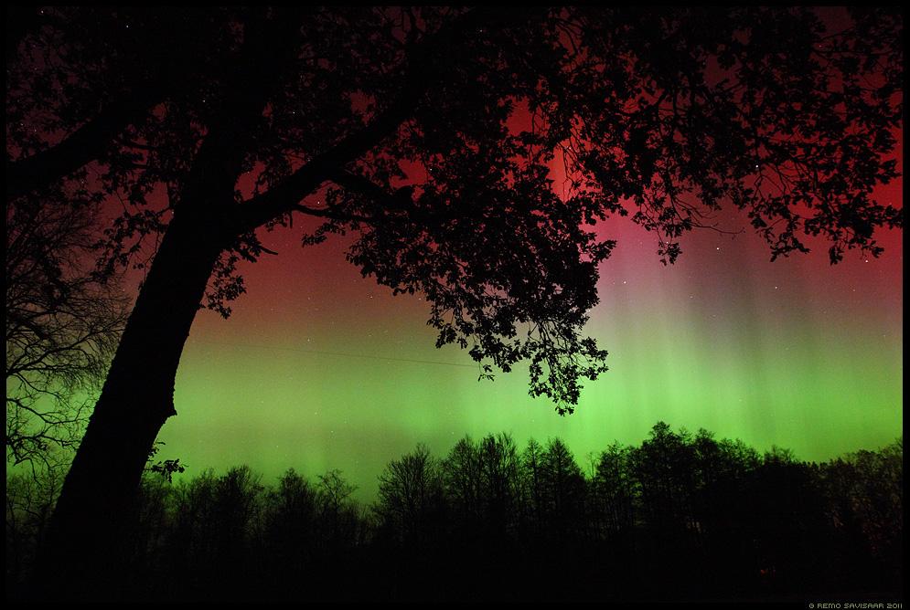 öö, Night, Virmalised, Northern Lights, tähistaevas, pime, tähed, meeleolu, värvidemäng, oktoober, october, Aurora Borealis, puu, puud, trees