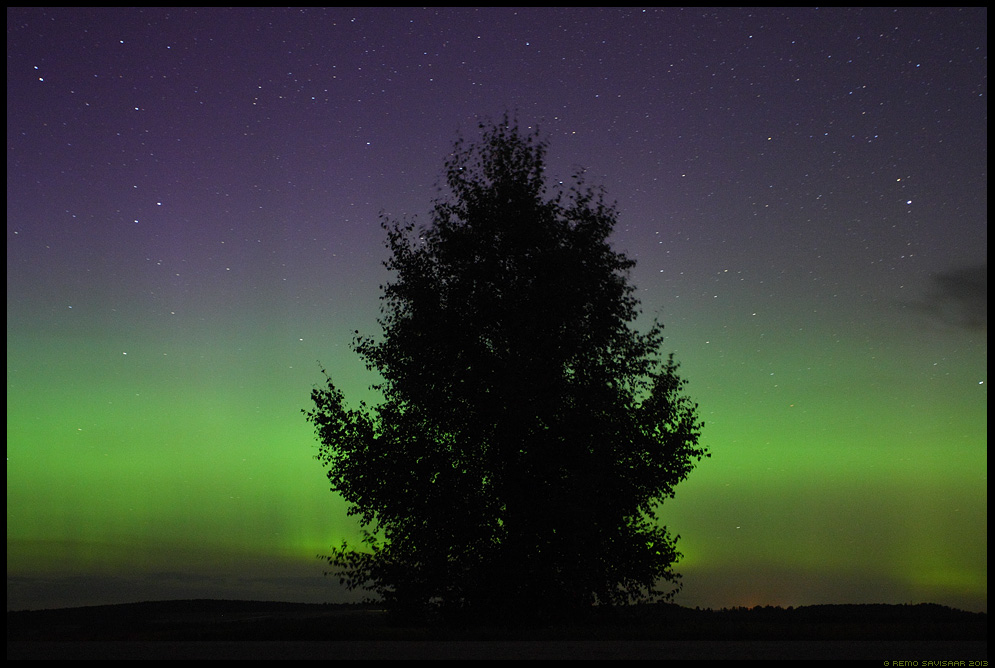 Aurora borealis, Northern Lights, Virmalised virmaline öö öömeeleolu tähistaevas Remo Savisaar Eesti loodus  Estonian Estonia Baltic nature wildlife photography photo blog loodusfotod loodusfoto looduspilt looduspildid