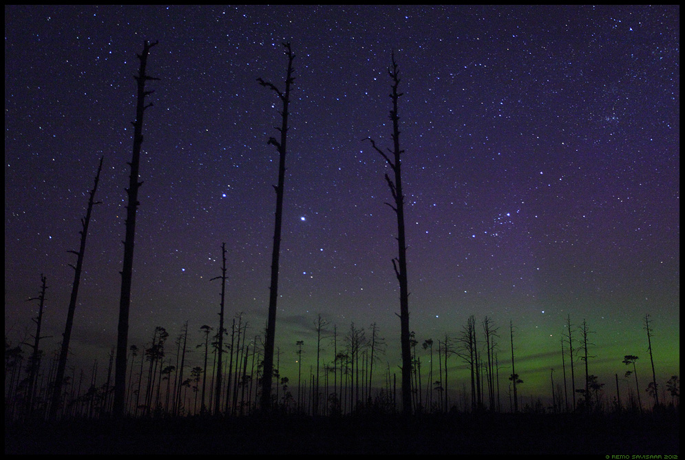 Värvid öös, Colours in the night, Virmalised, Northern Lights, Aurora Borealis, raba, bog, swamp, rabamännid, pine trees, kevad, öö, Night, pime